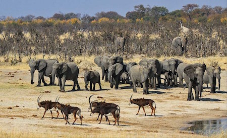 Le parc national de Hwange