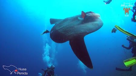 Meilleurs Sites de Plongée Bali