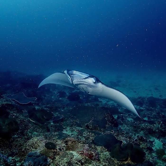 Le Safari de Plongée à Bali