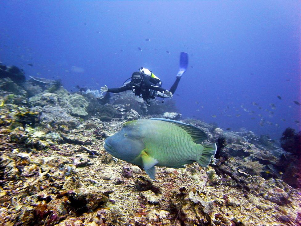 En savoir plus sur une Bali Plongée Sous Marine