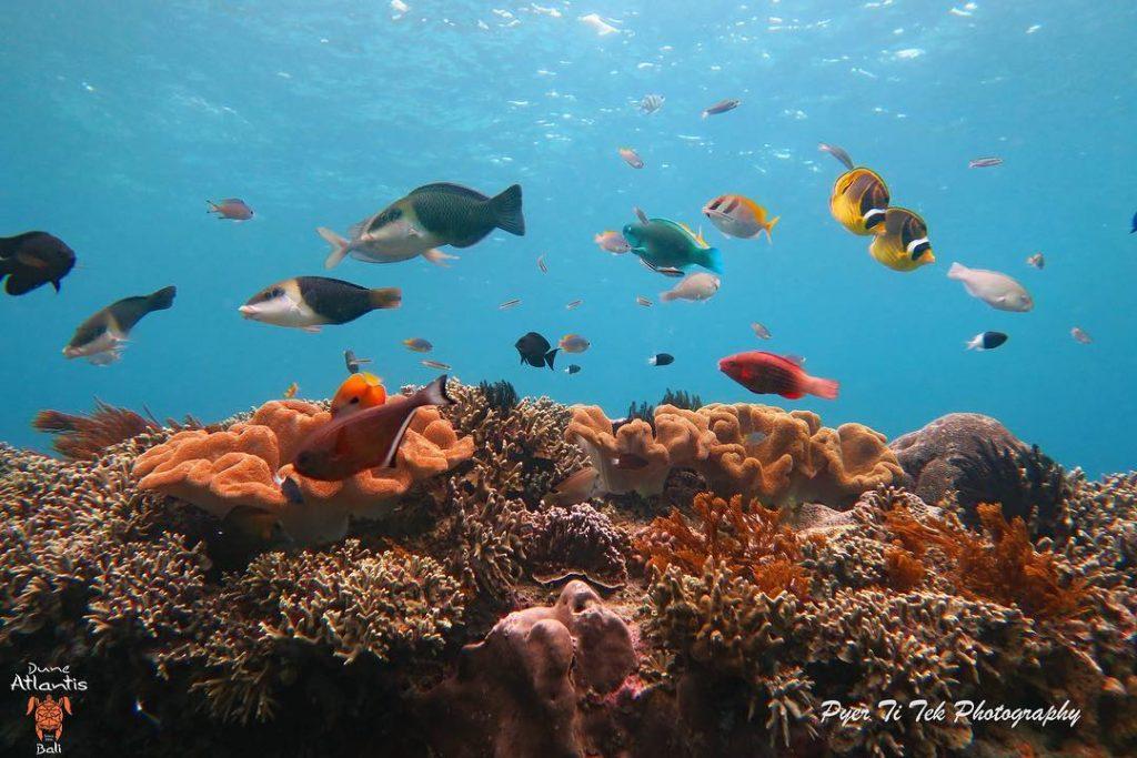 Profitez d'une plongée à Bali pendant les vacances
