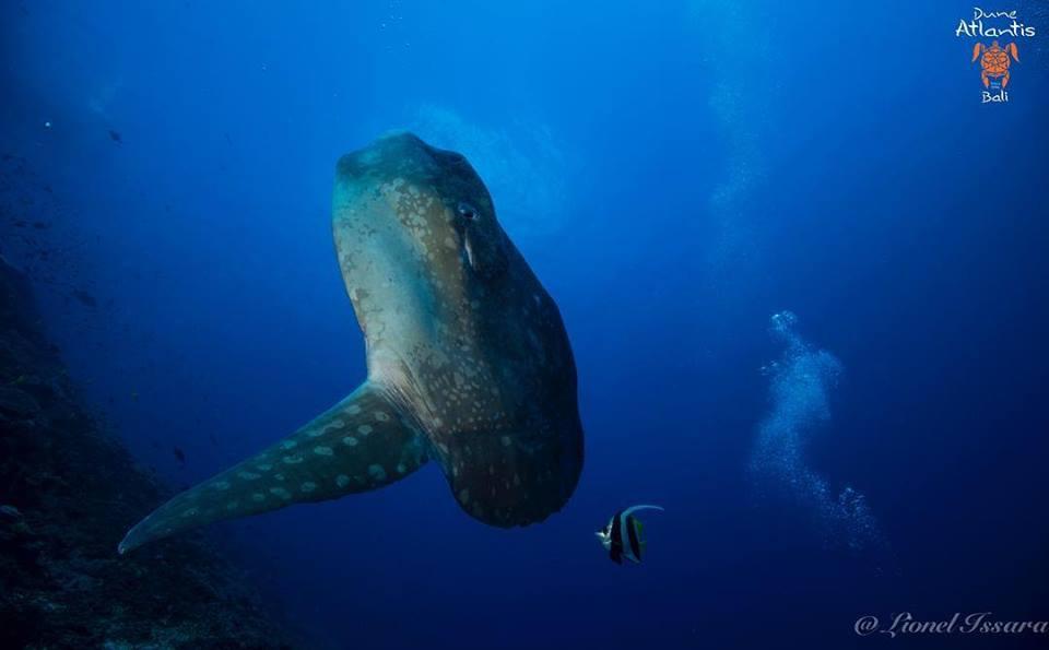 Vivez des moments intenses avec les Mola Mola Bali