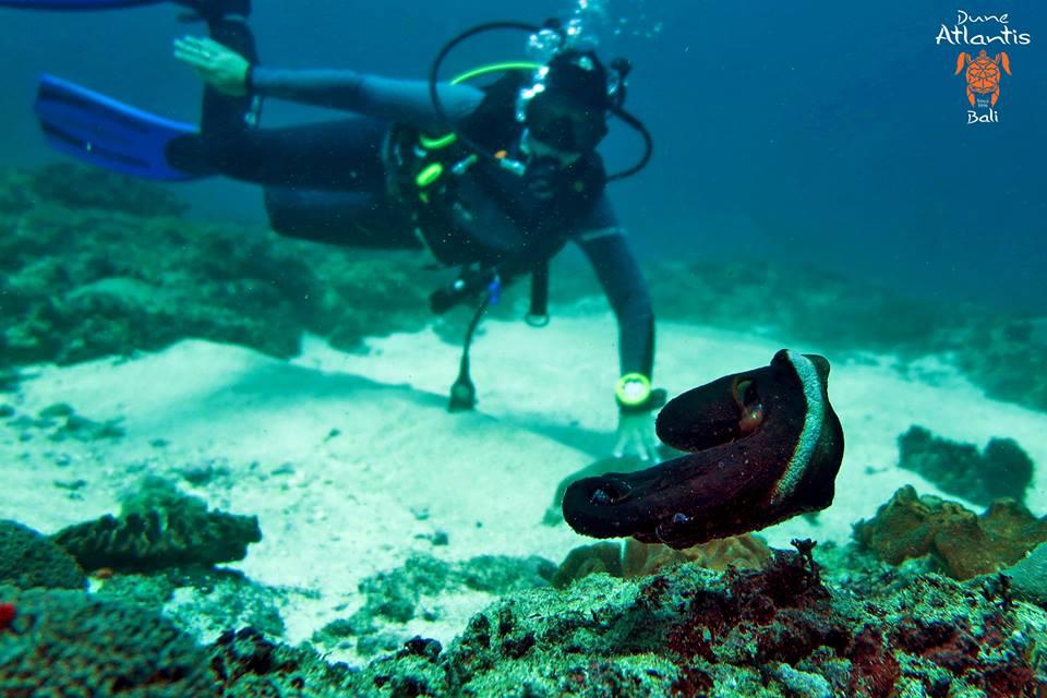 Dive Tulamben: Combien de plongées pouvez-vous y faire
