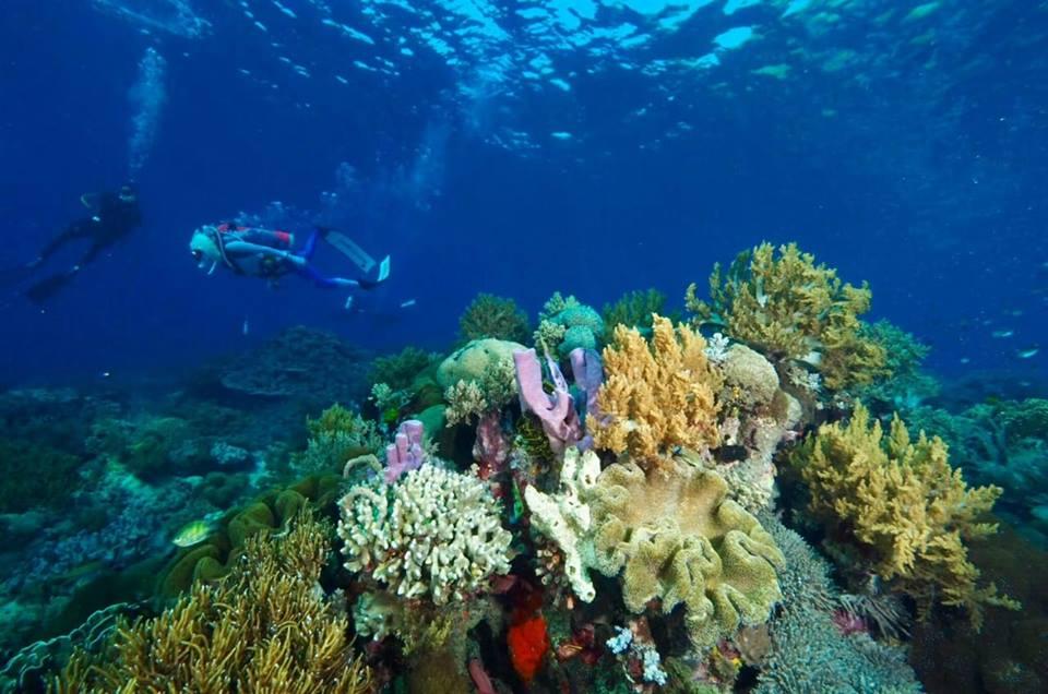 Plongée à Amed Bali et connaître les habitants
