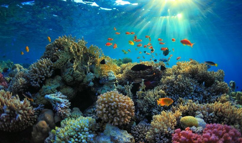 Les sites de plongées à Bali à ne pas manquer