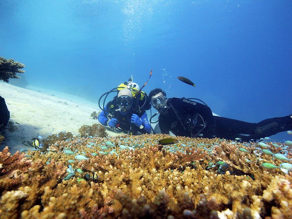 Les découvertes que vous pouvez faire avec une plongée bali