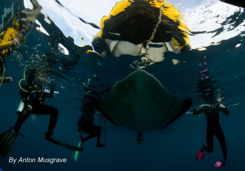 Chasse sous-marine : satisfaction assurée avec bali plongée