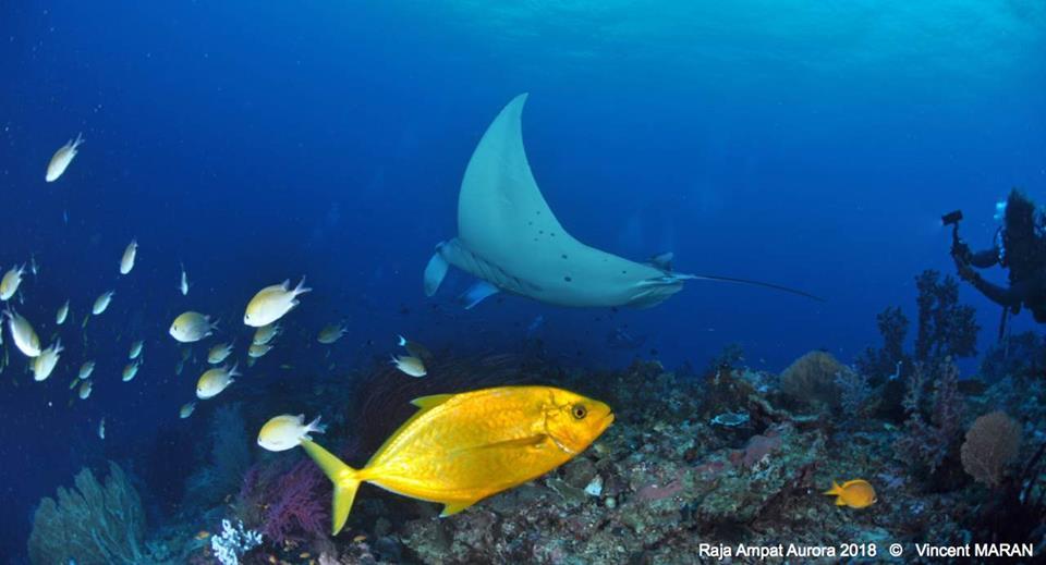 Plongée Nusa penida : les plus beaux spots de toute l'île de Bali