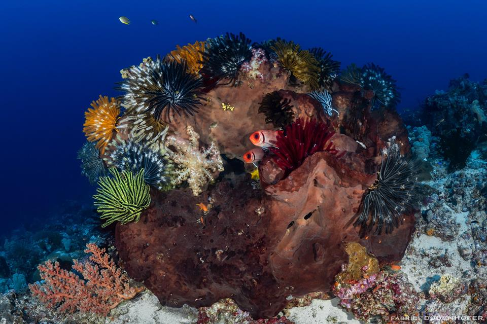 La Plongée Tulamben pour découvrir les merveilles sous-marines d'Indonésie