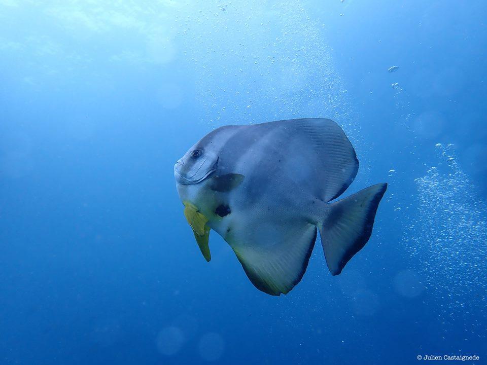 Tirer le Meilleur de la Plongée Bali